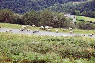 Iban Regnier - tourisme Euskadi Pays Basque - balade montagne 41