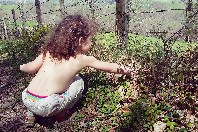 Iban Regnier - tourisme Euskadi Pays Basque - plantes sauvages 09