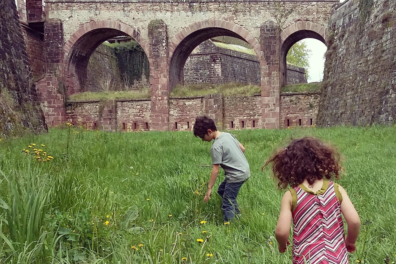 Iban Regnier - tourisme Euskadi Pays Basque - plantes sauvages 12
