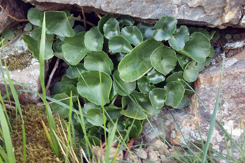 Iban Regnier - tourisme Euskadi Pays Basque - plantes sauvages 11